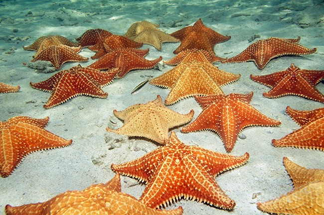 animais aquaticos invertebrados