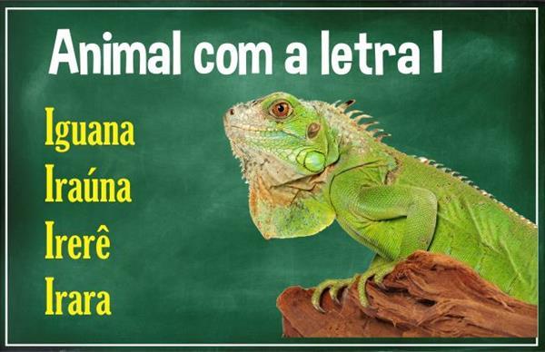 Animal com i