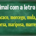 animal com m