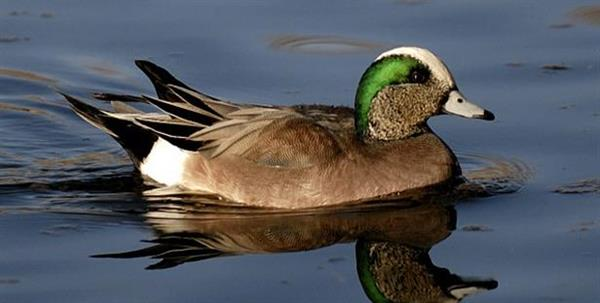 Foto: Duck Commander