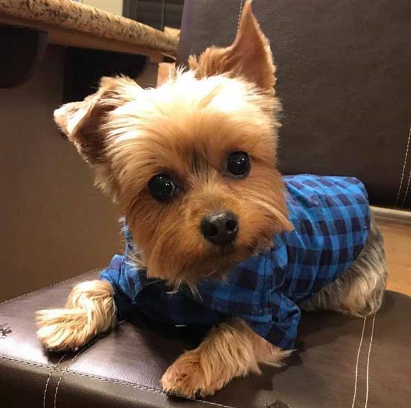 Cachorro-menino fofo