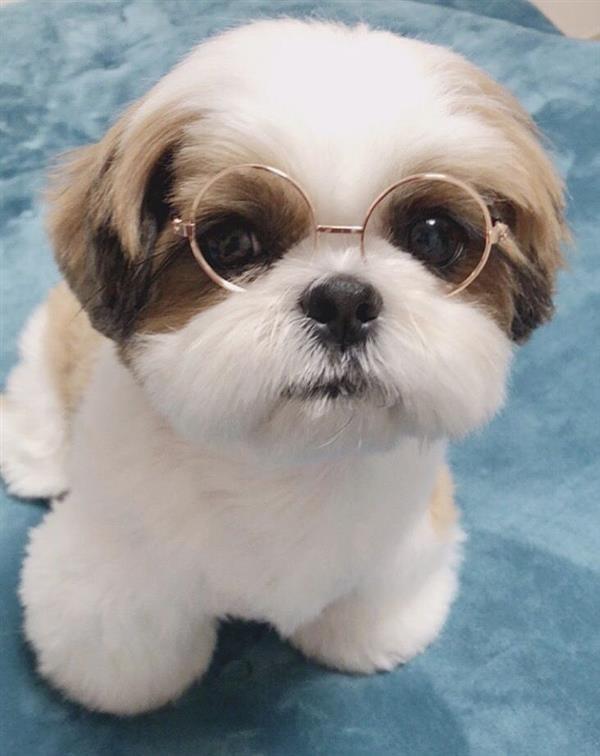 cachorrinho de oculos