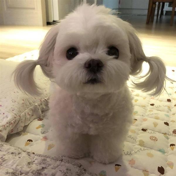 cachorrinho lindinha