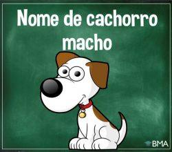 nome de cachorro macho