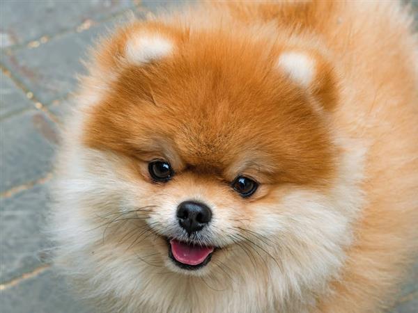 cachorro fofo