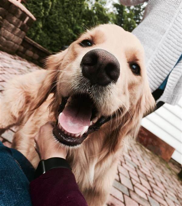 cachorro lindo