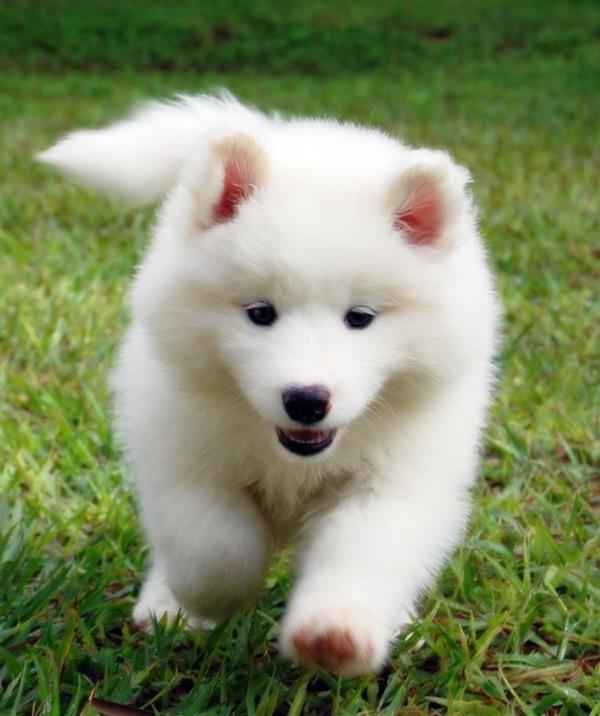 cachorros-para-se-apaixonar