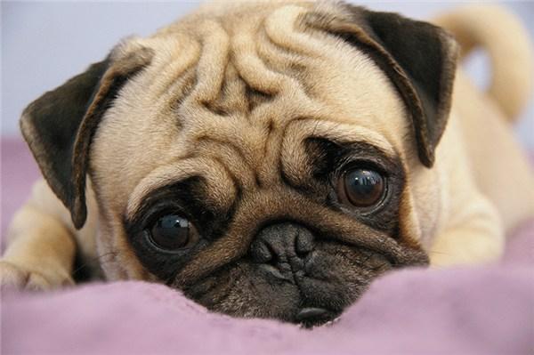 cachorros-pequenos-e-fofos