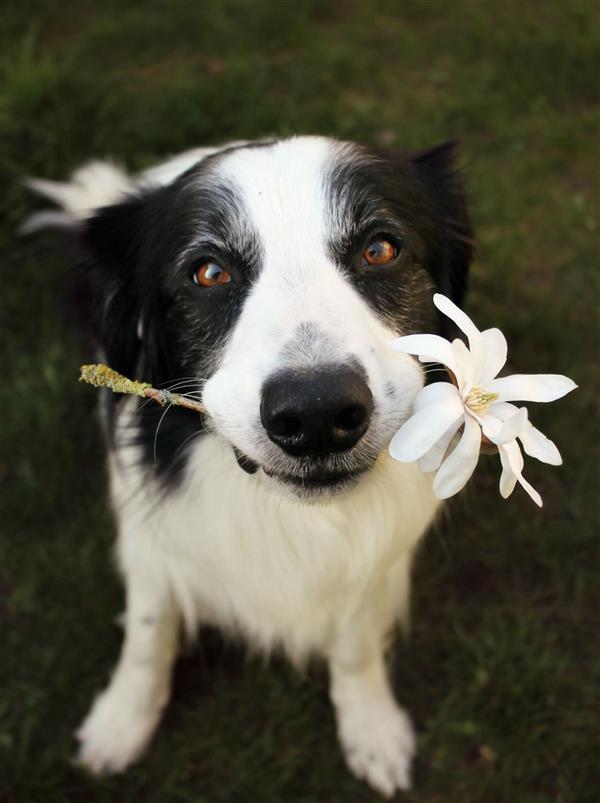 cahcorro com flor