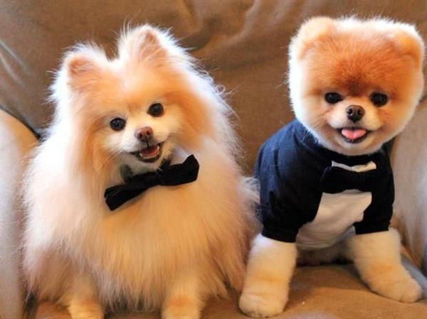 dogs comportados lindos