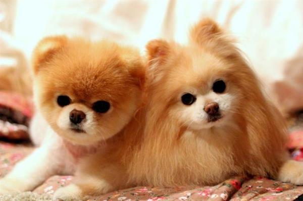 lindezas de cachorrinho