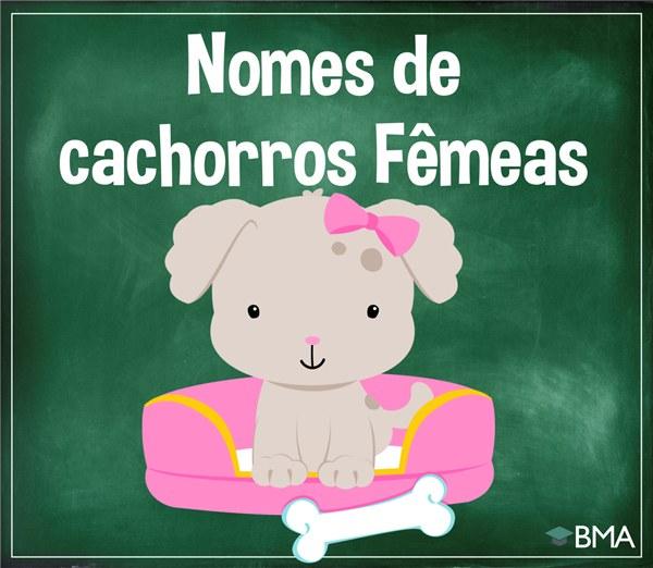 cachorros fêmeas